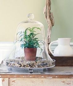 If You Prefer a Single Plant | Terrariums give you low-maintenance beauty all year long. NOTE Could use Ikea dish and glass cover as cloche.