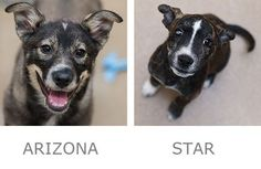 Adoptable puppies from © Best Friends Animal Sanctuary