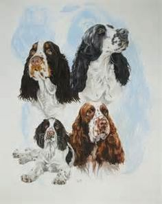 How to draw aEnglish Springer Spaniel - Yahoo Image Search Results