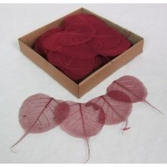 Bordeaux ( Dark Red)  Skeleton Leave -   Natural Floral Supplies These amazing detailed detailed skeleton make wonderful craft materials.  They are light and delicate and can be used in an array of ways.  Let you're creative imagination run wild with thsee esquisite leaves.  We also offer these skeleton leaves in a  wide range of colours:  Gold, Silver, Fuschia, Aqua Marine, Apple Green, Pink, Lilac, Blue, Bordeaux, Black, Red, Orange and Yellow.   For more craft supplies please visit our…