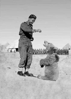wojtek the bear 1942-63, an official private in the polish army. he liked to wrestle and salute