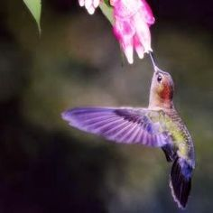 3c3f26d6af39e Hummingbirds are amazing little creatures that almost seem like something  out of a storybook. Anyone who is lucky enough to have them in their back  yards ...