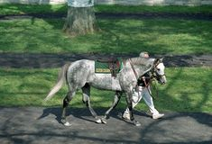 !997 Kentucky Derby and Preakness Winner, Silver Charm. He is now back in the US and live out his retirement at Old Friends in Kentucky!