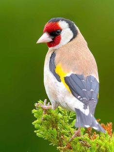 Bird, Photography, Animaux, Photograph, Birds, Fotografie, Photoshoot, Fotografia