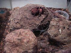 Tarantula terrarium, right part