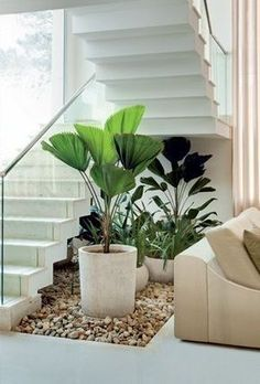 Great grounding of energy by various round leaf plants at the bottom of the stairs! Interior Design Plants, Interior Garden, Luxury Staircase, Staircase Design, Minimalist Garden, Minimalist House Design, House Plants Decor, Plant Decor, Indoor Plant Pots