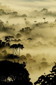 A Morning View by Nara Simhan. Photographer's note: Typical Rain Forest view from Borneo... A early morning shot during the Sunrise. I took this shot from a small uphill in Danum Valley. As the Sun was arising, the Mist has started filling the tall trees. It looked a different world.