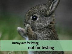 Every year millions of animals are used in unnecessary tests; all for the sake of beauty. Description from regenerateskincare.com. I searched for this on bing.com/images