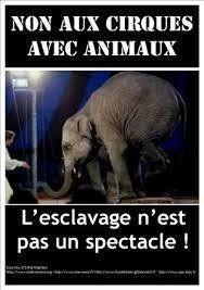 Pour la fin des cirques avec animaux dans la vallée du giffre