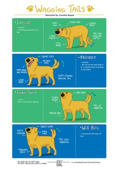 Doggy Body Language: Wagging Tails by CarolineRaquel on DeviantArt Dog Body Language, Education Canine, Dog Training Techniques, Dog Facts, Cat Behavior, Pet Health, Dog Care, Pet Shop, Rescue Dogs