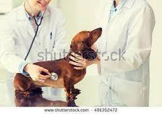 Animals Helpline : Veterinarian In Ludhiana