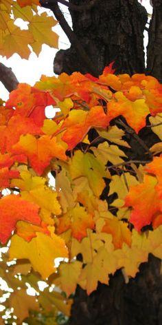 Autumn leaves...cool crisp days and the smell of fall.  Things I love about fall.