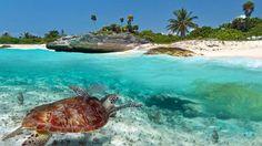 #LaReunion #OceanIndien #Team974 #tourisme