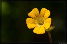 Herbs Pictures and Names | Recent Photos The Commons Getty Collection Galleries World Map App ...