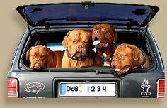 Dogue de Bordeaux @ www.bordeauxdogs.de