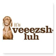 "Say Vizsla Sticker by sayvizsla. Yes, and the ""z"" is silent! Vee-Shhhlah!"
