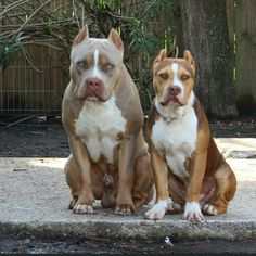 this pit couple