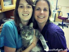 7 Reasons to Take Your Pet to the Vet for Check-ups #GetHealthyHappy | Pawsitively Pets