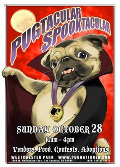 Two things about me. I was born on Halloween and love pugs!