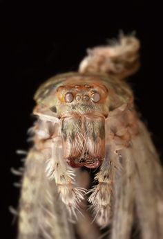 A close up of a pale spider