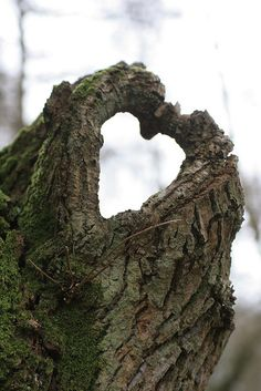 stump heart on the way into the woods...