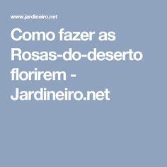 Como fazer as Rosas-do-deserto florirem - Jardineiro.net
