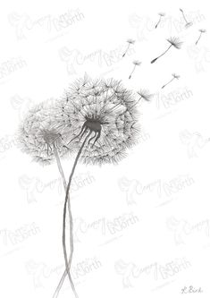 Dandelion Hand Drawn Digital Illustration with free postage | Etsy Dandelion Tattoo Quote, Dandelion Flower, Cursive Fonts, All Print, Pet Portraits, Thoughtful Gifts, Digital Illustration, Hand Drawn, How To Draw Hands