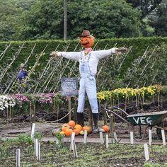 ... Follow the pumpkin trail through the garden and who knows who you will meet..... #heliganhalloween  #gardenlife #mevagissy #pentewan #cornwall #scarecrow
