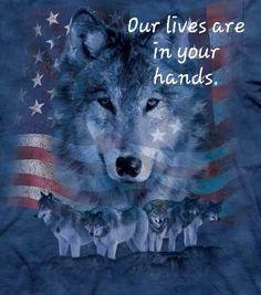 """My Pack of Wolves on Twitter: """"https://t.co/jULBGFzEgk"""""""