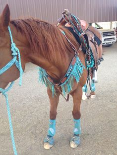 amazing tack saddle:flex tree pad: Won pad original splint boots: Professional choice glitter turquoise splint boots bell boots: Weaver turquoise cross bell boots tack set/head stall and breast collar: Showman hand beaded find @ chicks saddlery