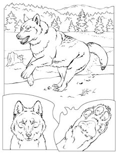 Printable Gray Wolf - Printable Coloring Book - Free Printable Coloring Pages Coloring Pages Nature, Horse Coloring Pages, Free Adult Coloring Pages, Printable Coloring Pages, Free Coloring, Coloring Books, Easy Disney Drawings, Animal Books, Animal Drawings
