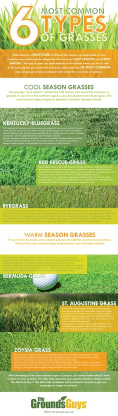 Common #grass types