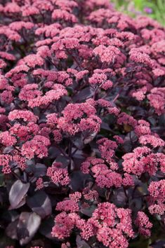 Bergknapp Green Garden, Flower Beds, Garden Inspiration, Garden Ideas, Dahlia, Perennials, Vines, Flora, Plants