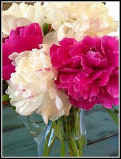 Peonies    Content in a Cottage