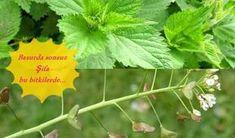 Basur nasıl geçer, bitkisel tedavi yöntemi nedir? Hemoroid (basur) nedir, hemoroid belirtileri, ilaç...