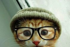cat cat cat cat cat cat cat