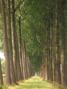 Unique Things To Do In Europe: Magic Tree Tunnel, Bruges Belgium