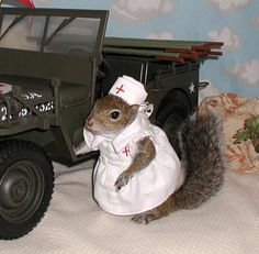 Sugar Bush Squirrel Volunteers with the Red Cross - The most photographed squirrel in the world - Pictures - CBS News