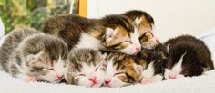 Happy ending for Mum & new born kittens cats protection