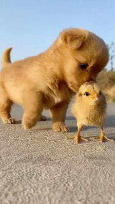 Animals fun videos