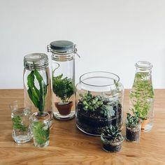 We're no experts with aquatic plants. All we know is that we like them (and…