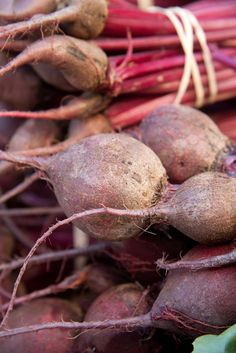 How to Grow Beets Guide to Growing Beets vegbeet Pinterest