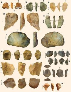 1000+ images about anthro me on Pinterest | Homo Habilis, Early ...