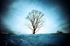 lomo winter