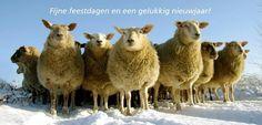 Bestel onze wenskaart | Compassion in World Farming Nederland : Order your festive cards!