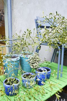 Dont forget the mistletoe! Pots and planters available to buy in stores and online Garden Inspiration, Interior Inspiration, Tricia Guild, Vert Turquoise, Growing Veggies, Designers Guild, Mistletoe, Flower Photos, Garden Art