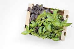 gather moments : BAZALKOVÉ PESTO Pesto, Asparagus, Herbs, In This Moment, Vegetables, Food, Studs, Essen, Herb
