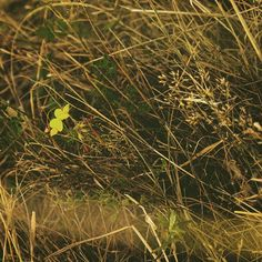 #day #daylight #flowers #closeup #light #photo #photography #colors #closeupflower #goldenhour #dslr #dslr_photography #romania #orastie