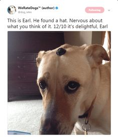 24 H*ckin' Funny Tweets From We Rate Dogs