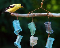 Even my goldfinches like my sea glass mobile!